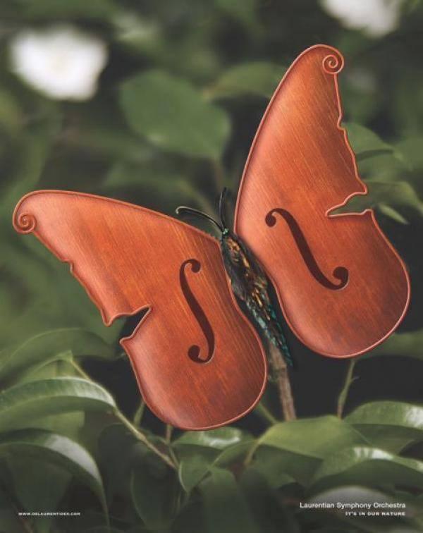 真美麗的小提琴蝴蝶阿