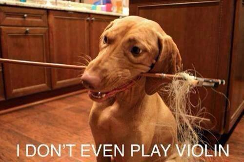 家裡有養狗又拉小提琴的要注意喔