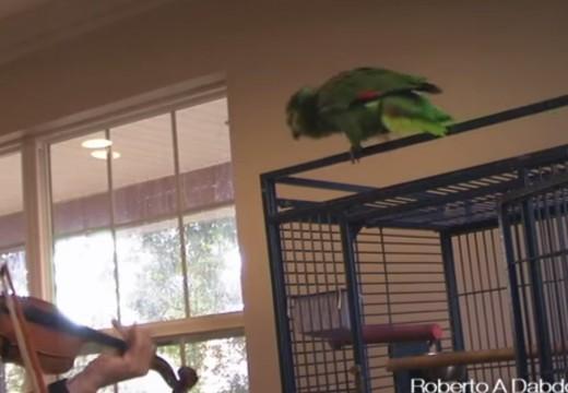 拉琴給會唱歌的小鳥聽很美好,但要小心悲劇
